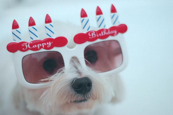 happy-21st-birthday07
