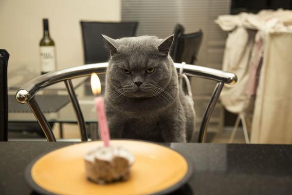 happy-birthday-cat02