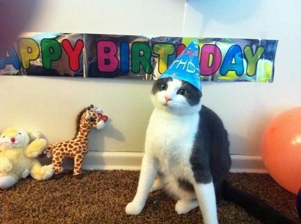 happy-birthday-cat03