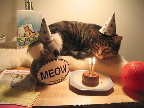happy-birthday-cat04