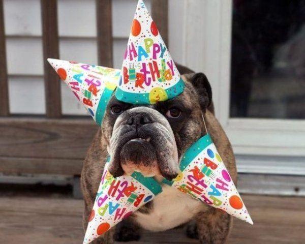 happy-birthday-dog04